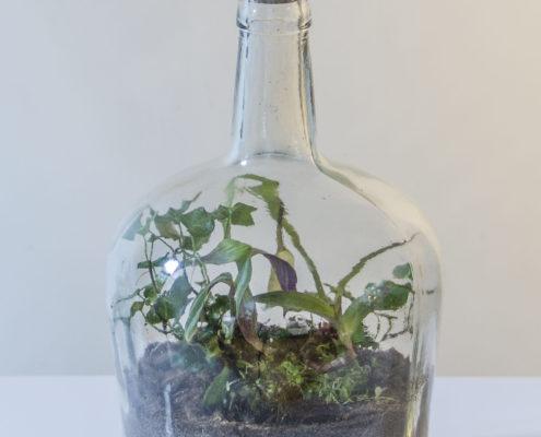 Unieke en originele flessentuinen van Flessengroen