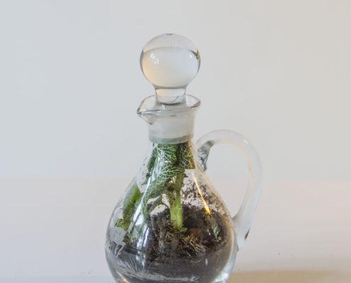 Een mini biotoop in een fles van Flessengroen