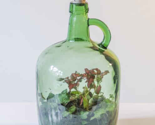 Een groene biotoop in huis van Flessengroen