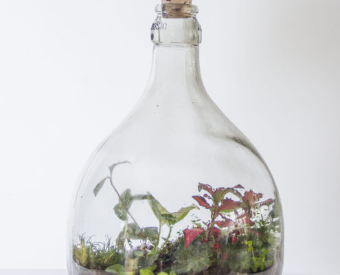 Uniek, met de hand gevuld flessentuinen