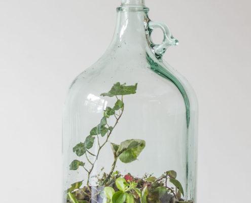 Een flessentuin in je eigen fles van Flessengroen